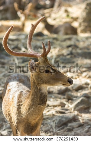 stag, male deer in the zoo
