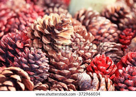 Stained pine cones - stock photo