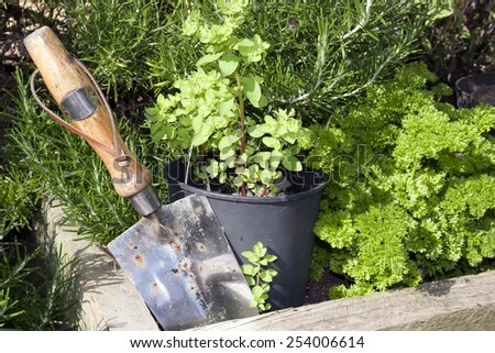 stainless steel garden trowel in a herb garden in Ireland - stock photo