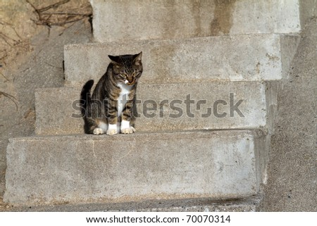 Stairs and kittens - stock photo