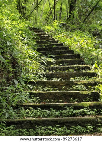 Stairs in the rainy season green forest - stock photo