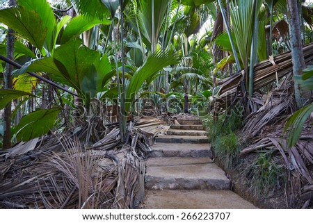 Stairs in tropics, Seychelles