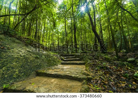 Stairs walkway through Thailand tropical rainforest - Phaeng Koh Phangan - stock photo