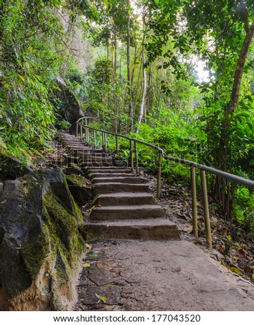 Stairway in the diperocarp forest