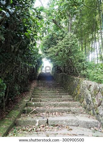 Stairway to jungle - stock photo