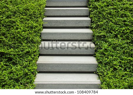 Stairway with green plant - stock photo