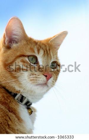 Stalking Feline - stock photo