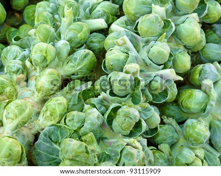 Stalks of brussels sprouts at farmers' market