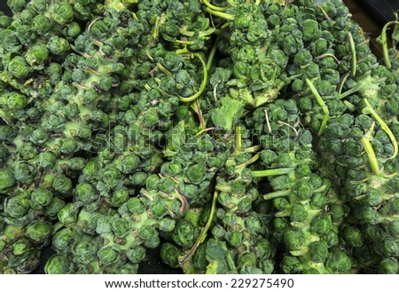 Stalks of fresh Brussel sprouts at a farm market. - stock photo