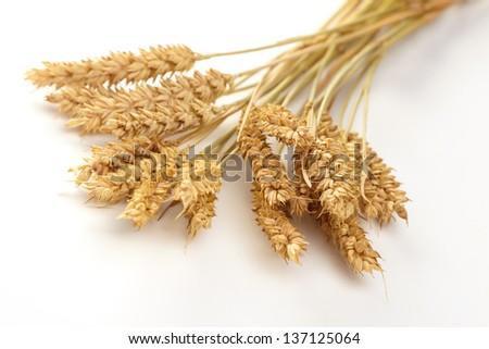 Stalks of wheat ears - stock photo