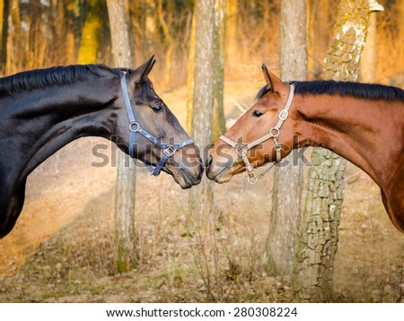 stallion and mare - stock photo