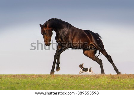 Stallion play with jack russel terrier - stock photo