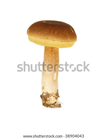 stand big brown  mushroom on white background