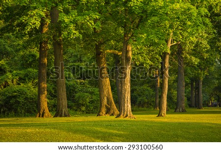 Stand of trees in michigan park forest - stock photo