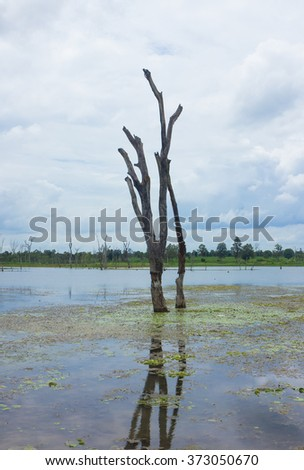 Standing dead tree that died in river. - stock photo