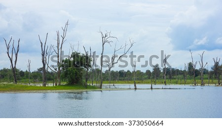 Standing dead trees that died in river. - stock photo