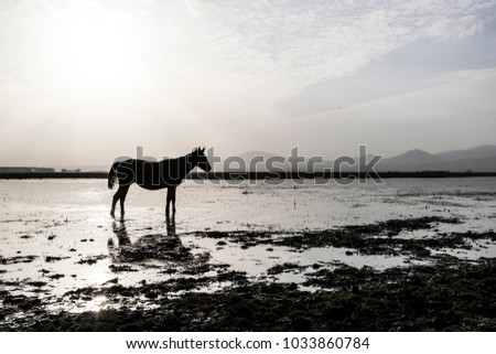 Standing Horse towards Sunset