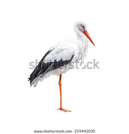 Standing on one leg stork bird isolated on white background - stock photo