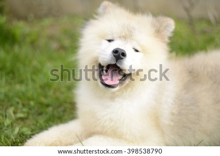 Standing white cute dog. White like snow in contrast with green grass and a little part with brown background. - stock photo