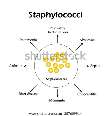 Viral Shapes Vector Illustration Showing That Stock Vector ... Staphylococcus Bacteria Diagram