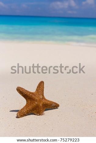 Star Dream Idea - stock photo