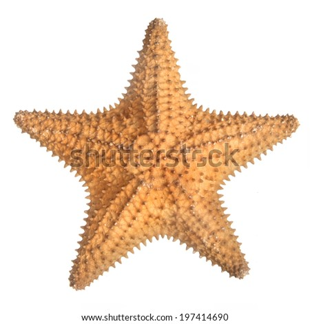 star fish isolated on white - stock photo