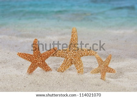 Star fish on beach with blurred background