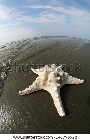 Star Fish on the beach - stock photo