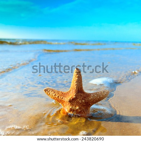 Star Fish Shell  - stock photo