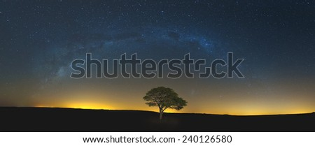 Star scape with lone tree brown grass and Milky Way in soft light - stock photo