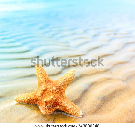 Star Sea Shell  - stock photo