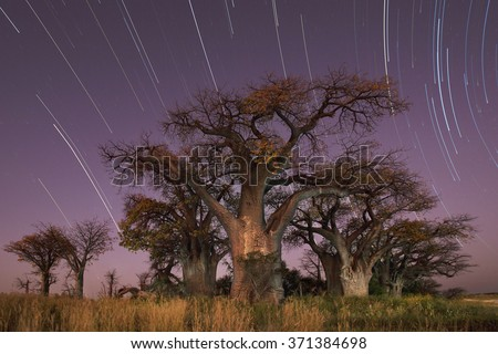 Star trail over Baines Baobabs - stock photo