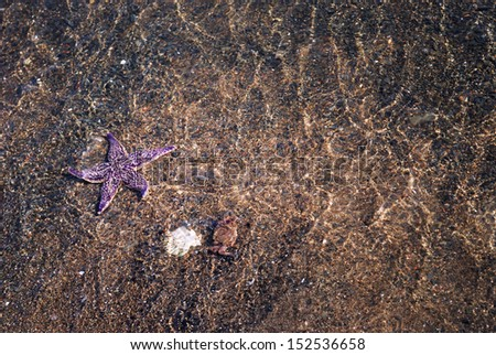 Starfish and crab in the waves
