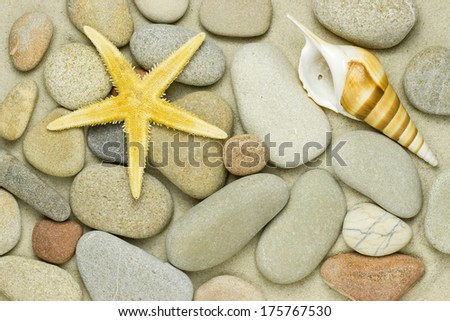 starfish and pebbles on the beach - stock photo