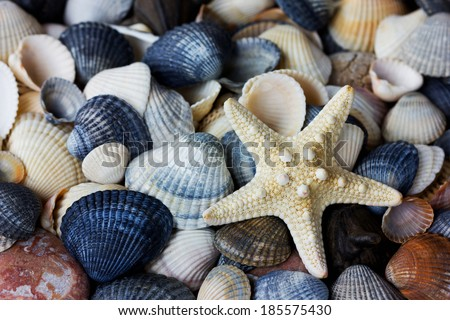 Starfish and seashells collection, can be used as a background - stock photo