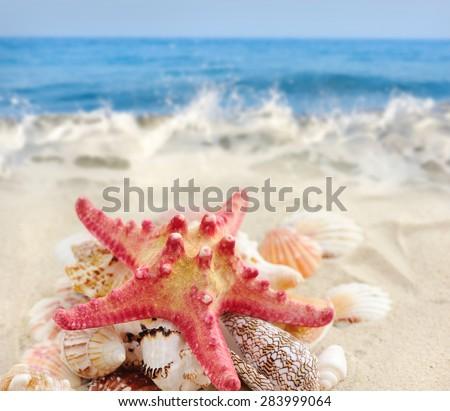 Starfish and seashells on sandy beach - stock photo