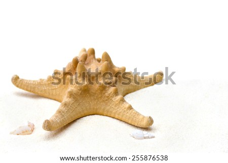 Starfish and shell on sand with white background. - stock photo