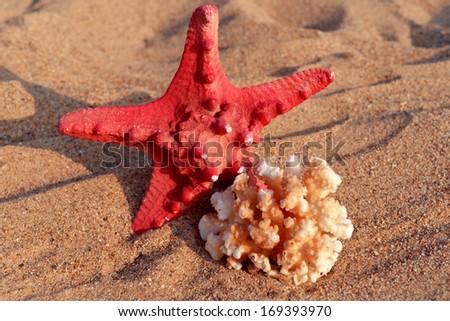 Starfish and shells on the sand - stock photo