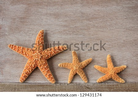 Starfish (Asterias rubens) from the North Sea on an old wooden board