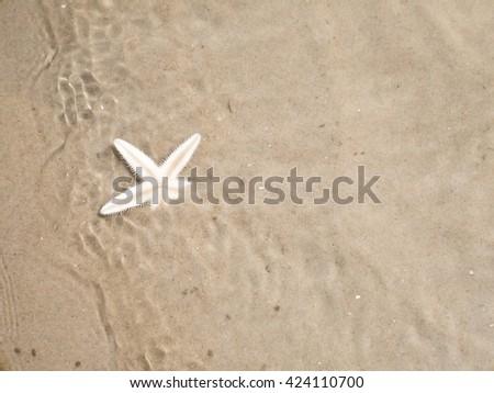 Starfish buries itself in the sand, shallow water - stock photo