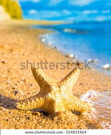 Starfish called Wanda On a Beach - stock photo