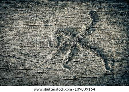 Starfish in black and white color - stock photo