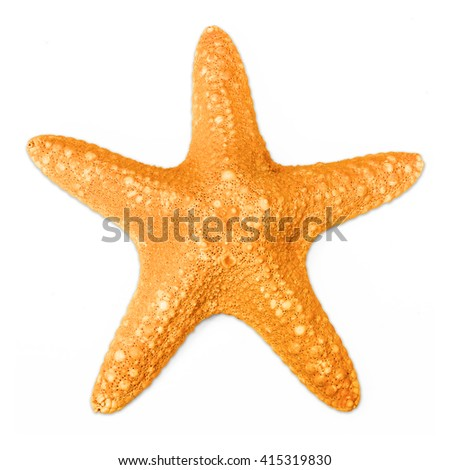 Starfish in orange color isolated on white background - stock photo