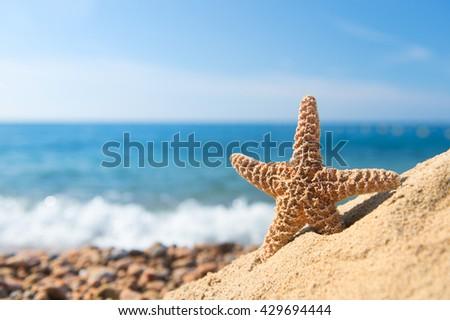 Starfish in sand at the beach - stock photo