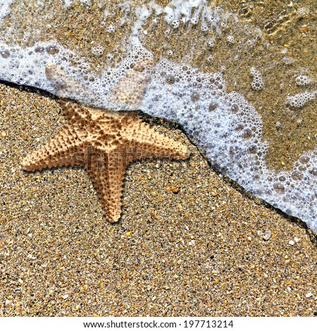 Starfish in the foam of the surf on the shore - stock photo