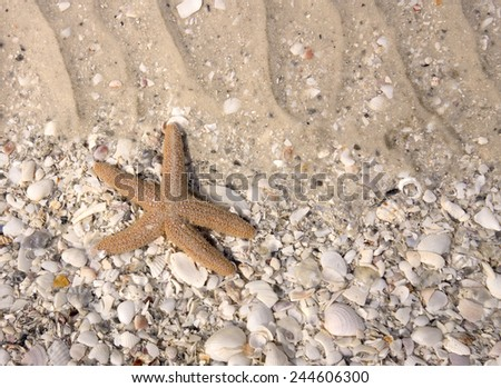 Starfish in Tidal Pool with Shells - stock photo