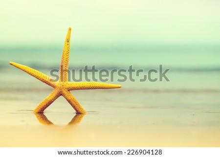 Starfish in water on sandy beach.Yellow sea star. Copy space - stock photo
