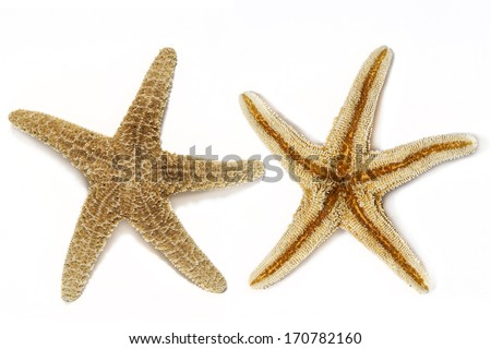 Starfish isolated - stock photo