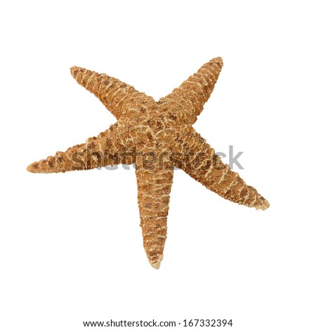Starfish isolated on a white background - stock photo