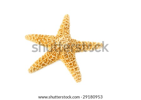 Starfish isolated on a white background with room for text. - stock photo